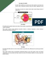 5 SENTIDOS.docx