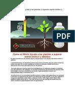 Como el Silicio Ayuda a las plantas a superar estrés biótico y abiótico.docx