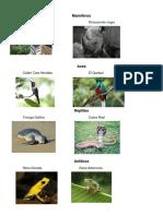 2 animales en peligro de extinsion Mamíferos Aves reptiles peces etc.docx