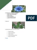 25 plantas medicinales