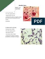 microbi lamite.docx