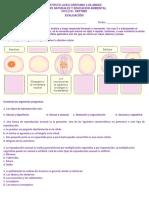 EVALUACIONES  SEPTIMO 1 CORTE 2019.docx