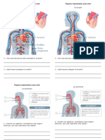 Ciencias Organos Del Cuerpo