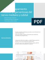 Nervio Cubital y Mediano