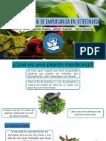 plantas peruanas