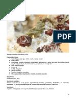 70 SP Compendio de Mineralogia