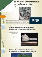 Banco de Huellas de Mamíferos Medianos y Grandes Obs Final Gjimenez