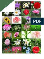 Flores y Valores.docx