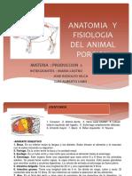 Anatomia y Fisiologia Del Animal Porcion