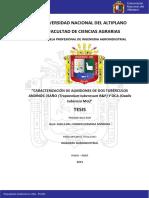 tesis almidon y carbohidratos oca.pdf