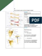 Paso 2 Anatomia PDF