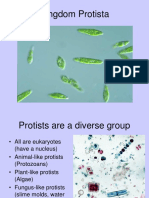 Protista KIngdom and Levels