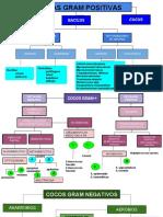 CLASIFICACION DE LAS BACTERIAS.pdf