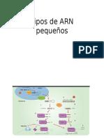 Tipos de ARN pequeños.pptx
