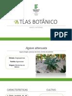 Atlas Botânico Atual