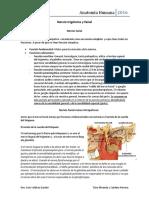 Clase 9 - Anatomia Humana 28-10-2016.docx