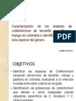 Caracterización de Los Aislados de Colletotrichum de Tamarillo 1