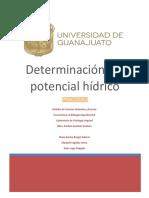 Interaccion Planta Microorganismo