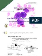 Regras e erros na observ esfreg MO.pdf