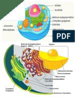 celulas e estados fisicos da materia.docx