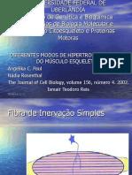 diferentesmodosdehipertrofia-100605071027-phpapp01