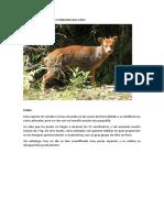 Animales en Peligro de Extincion en El Peru y El Mundo