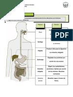 sistema digestivo 8º.docx