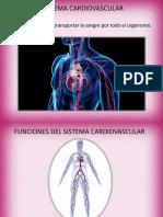 Presentaciónsistema Cardiovascular
