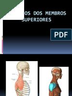 Aula 04 - Músculos Apendiculares