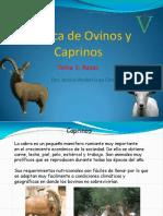 ovinosycaprinos