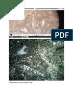 Eulopidina dilatata.docx