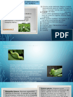 3.4.8-plagas-enfermedades-cosecha-y-carta-tecno-Ajonjoli-conf-25-11marzo