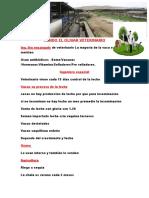 Fundo el olivar veterinario.docx