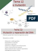 Tema 12 la mutación2015_5_18D20_39