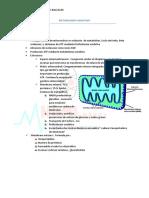Metabolismo Oxidativo.pdf
