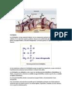 Fosfolípidos.docx