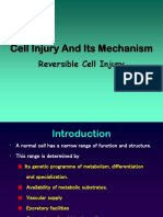 Cell Injury and Its Mechanism