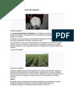 Procesos industriales del algodón.docx