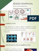 Embriología Temprana