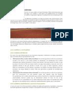 Evolución Del Ecosistema.docx
