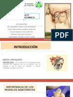 MODELO ANATÓMICO PROYECTO FINAL II.pptx