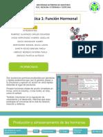 PRACTICA 1 FUNCION HORMONAL L.pptx