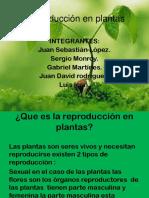 Reproducion en Plantas