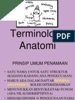 Terminologi Anatomia