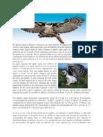 Águila arpía11.docx