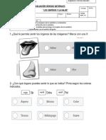 evaluacion sentidos.docx