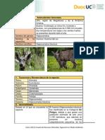 LaboratorioITaxonomia huemul chileno.docx
