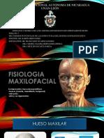 Fisiologia y Sistema Estomatognatico