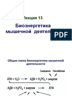 Lektsia 13 Bioenergetika Myshechnoy Raboty Ppt