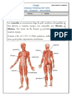 musculos.docx